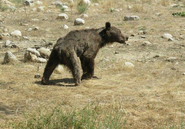 ماجرای کشتن توله خرس در سوادکوه