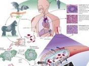 چگونه از «ابولا» در امان بمانیم؟