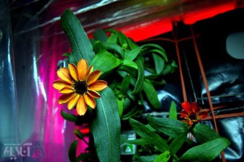 نخستین گل در فضا شکفت