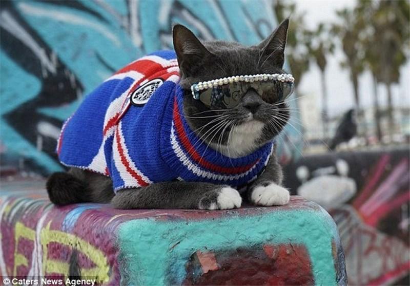 گربهای که عینک دودی میزند / تصاویر