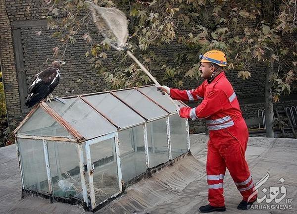 صید عقاب طلایی در مشهد+تصاویر