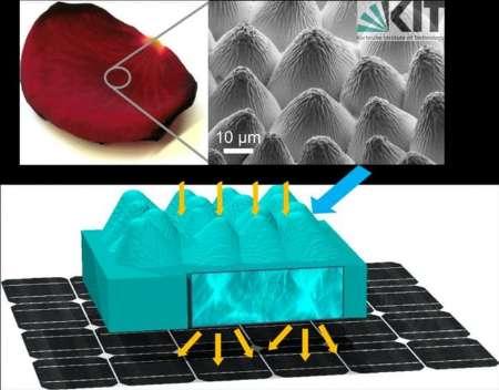 ساخت سلول خورشیدی با الهام گرفتن از یک گل+تصاویر