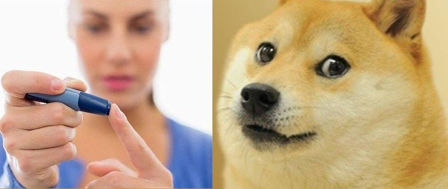 آزمایش قند خون از روی تنفس با کمک سگها