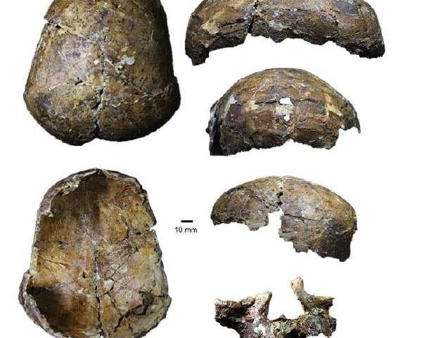 شگفتی دانشمندان از جمجمه ۳۷ هزار ساله+تصویر