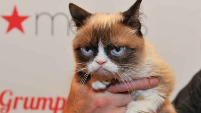 گربه اخمو 710هزار دلار غرامت گرفت+تصاویر