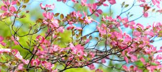 نغمه زندگی، هدیه نو شدن فصل بهار است