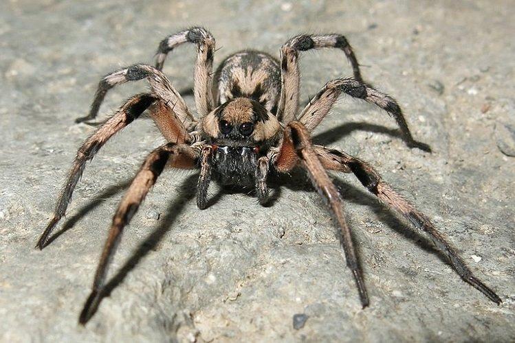 ردپای عنکبوت غول پیکر هری پاتر در ایران