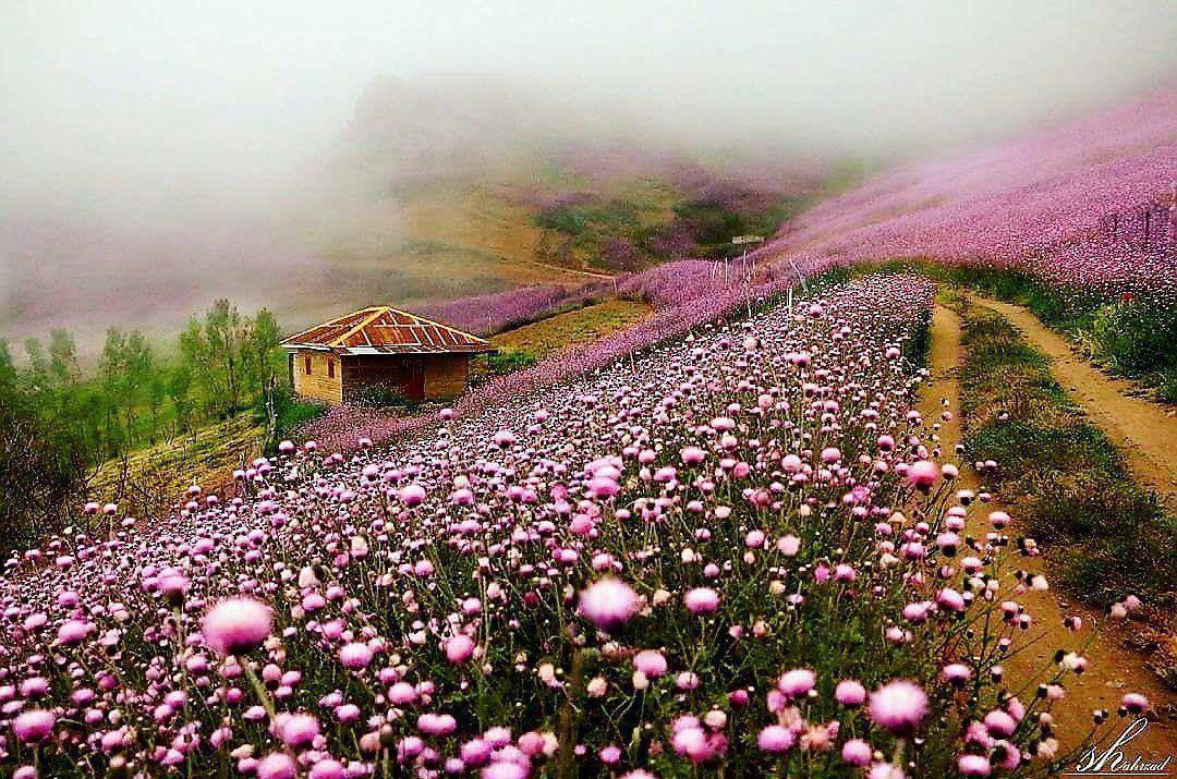 کوههای زیبای تالش/تصویر