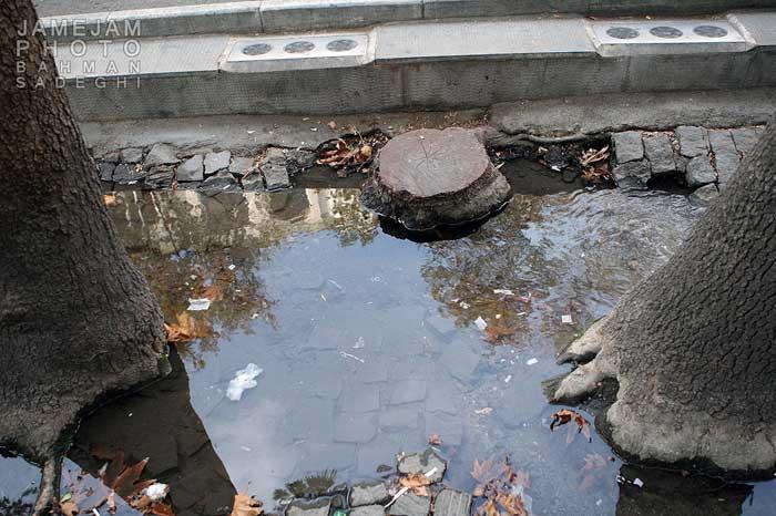 قتل سبز در خیابان ولیعصر/ پشتپرده جنایت در نیمه شب پایتخت+تصاویر