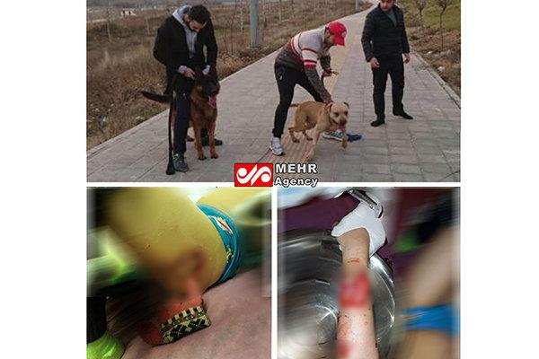 حمله دو سگ یک آقازاده به دختربچهای در پارک