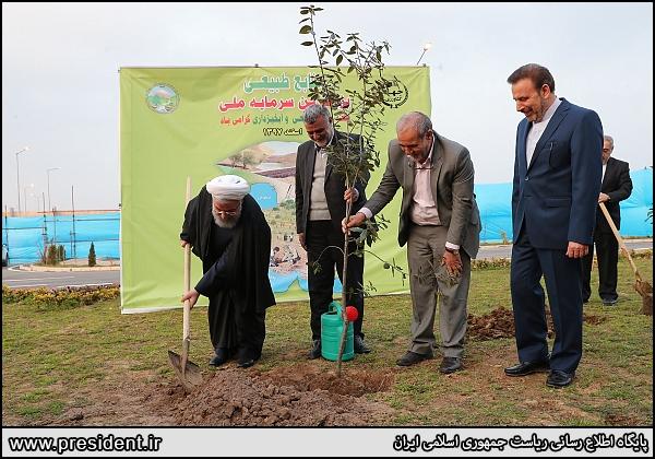 رئیسجمهور: همگان در عرصه درختکاری تلاش کنند