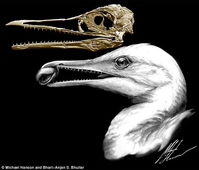 کشف چهار فسیل ماهیمرغ ۸۵ میلیون ساله+ عکس