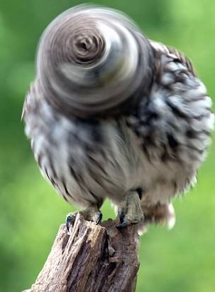 سر جادویی جغد پرنده شکار لنز عکاس شد