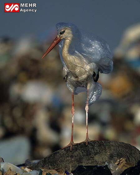 تصویر تکان دهنده از طبیعت!