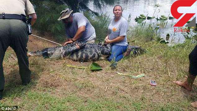 تمساح یک زن را خورد/عکس