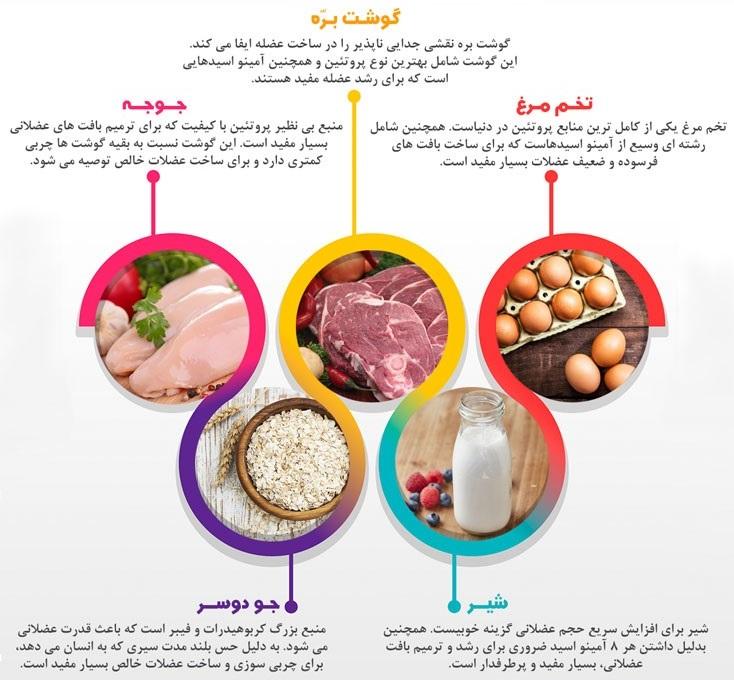 ۵ منبع غذایی غنی و خوشمزه برای عضله سازی + اینفوگرافی