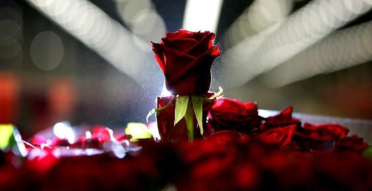 8 دلیلی که به شما می گوید چرا انسان ها به شعر احتیاج دارند