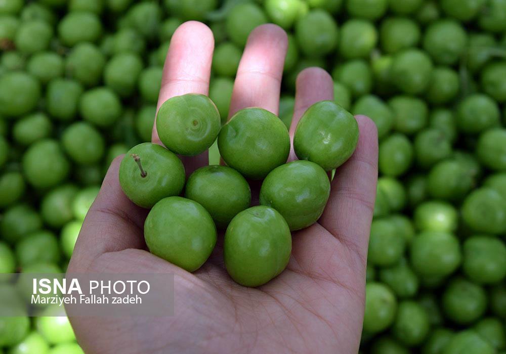 گوجه سبز 90 هزار تومان| پیاز 12 هزار تومان| رئیس اتحادیه میوهفروشان: مردم کمی صبر و تحمل داشته باشند!