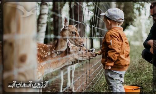 یک تفریح عالی مخصوص کودکان و دوستداران حیات وحش