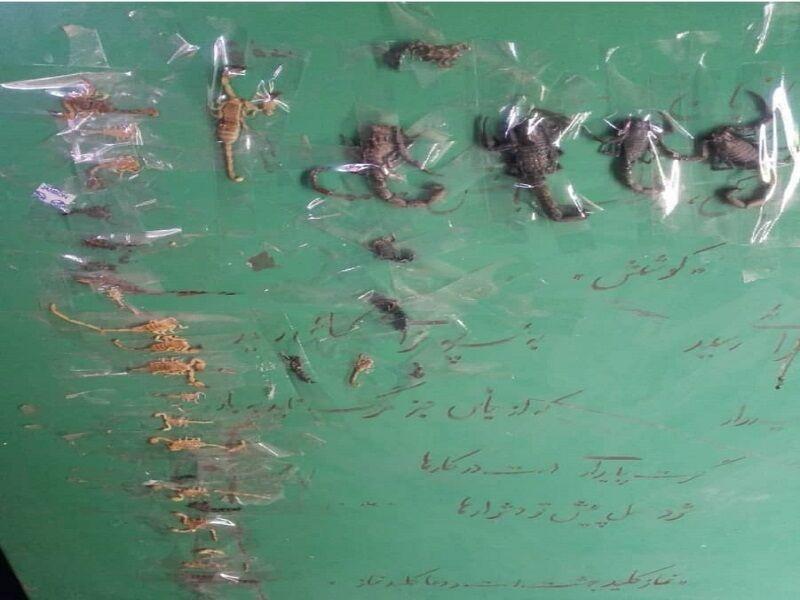 هم نشینی دانش آموزان و عقرب ها در یک روستای ایذه خوزستان +عکس