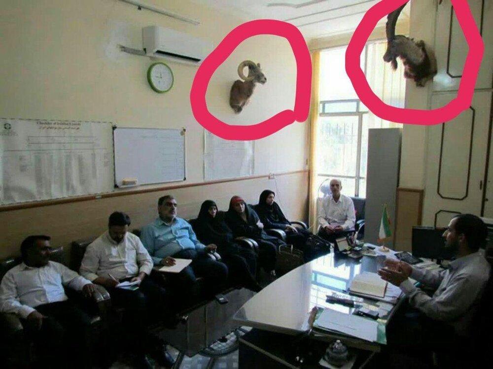 سر تاکسیدرمی شده حیوانات در اداره محیطزیست یزد چه میکرد؟/ عکس