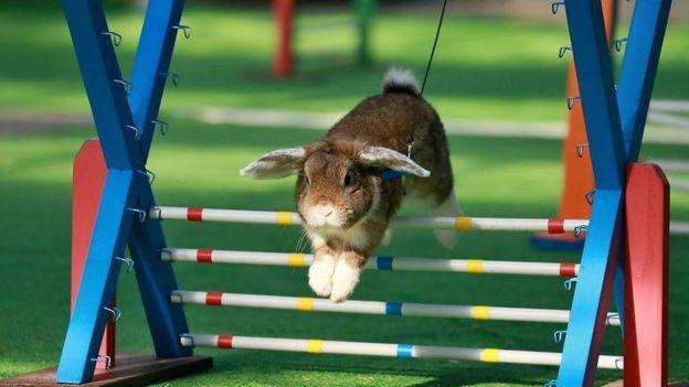 ۶ نکته که در مورد خرگوشها نمیدانید