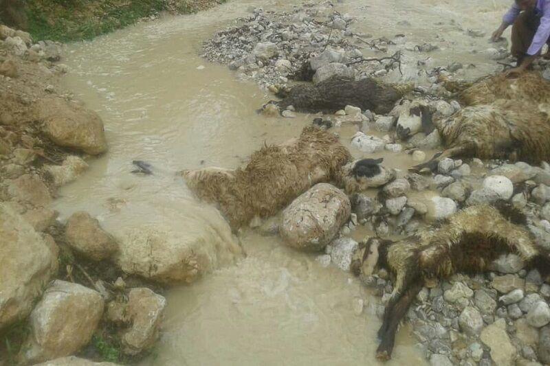 سیل دیروز لرستان ۱۰۰ گوسفند را تلف کرد/ عکس