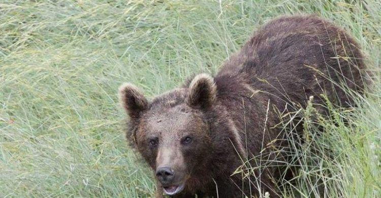 عاملان انتشار عکس کشتار خرس دستگیر شدند
