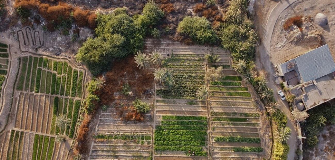 تصاویر| «باغ شاهی»؛ در دل شهر بندرعباس