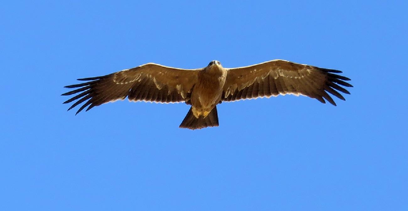 تصاویر| پرندگان زیبا در استان خوزستان