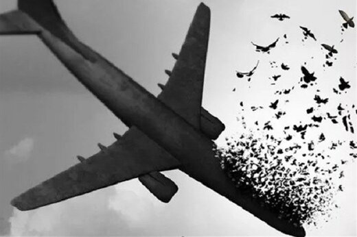 نام ۱۴۸ مسافر هواپیمای اوکراینی به عنوان شهید به بنیاد شهید داده شد