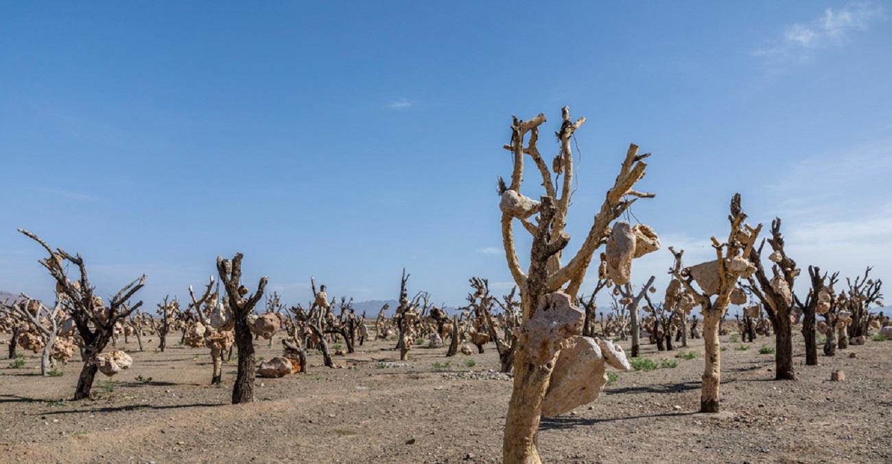 تصاویر| باغ میوههای سنگی درویشخان
