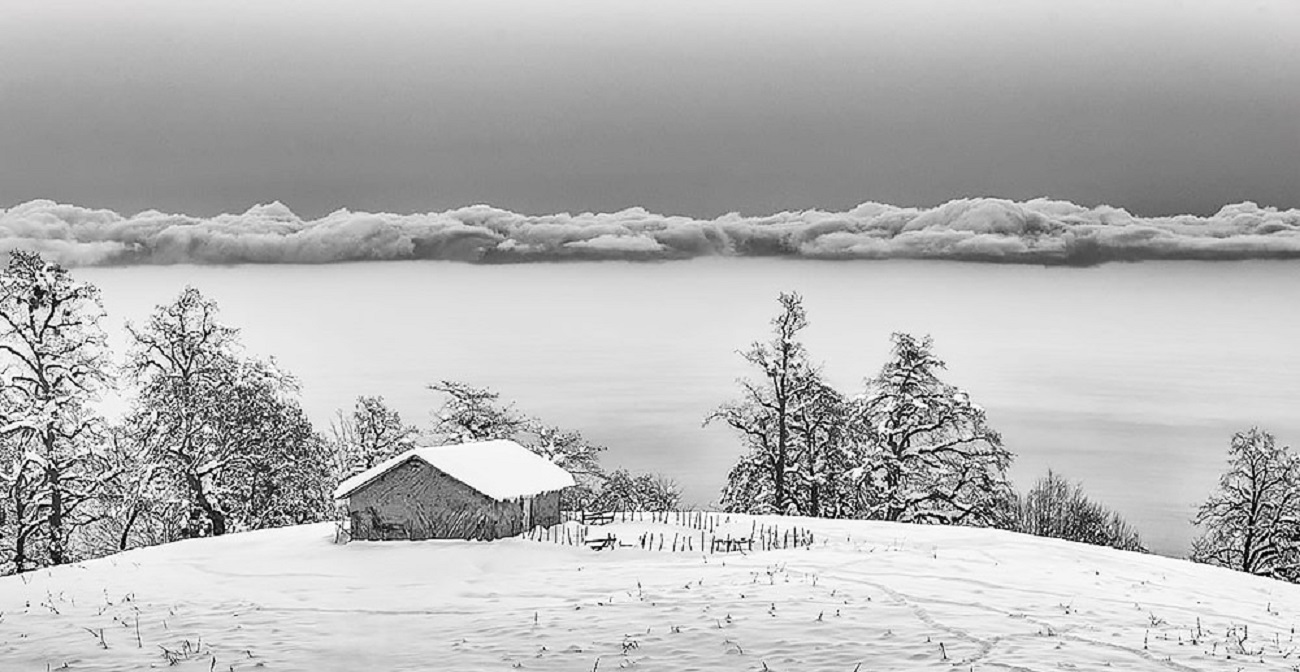 تصاویر| زمستان زیبای جنگلهای تنکابن