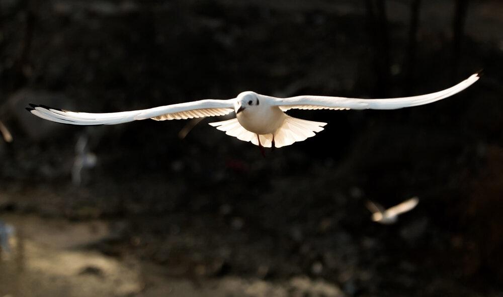 تصاویر| پرواز کاکاییها برفراز چشمه کیله