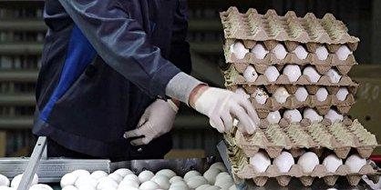 رانت روزانه ۱۶ میلیارد تومان در بستهبندی تخم مرغ