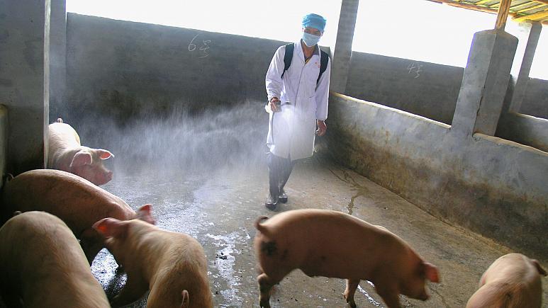 احتمال همهگیری آنفولانزای جدید خوکی؛ چین: همه چیز تحت کنترل است