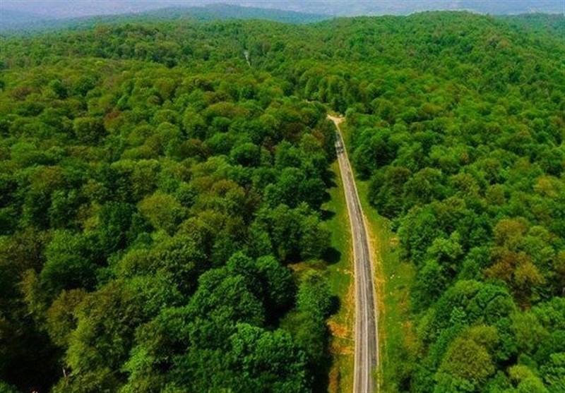 هر ثانیه ۳۶۰ مترمربع از طبیعت ایران محو میشود/ تا ۶۰ سال دیگر جنگل نخواهیم داشت