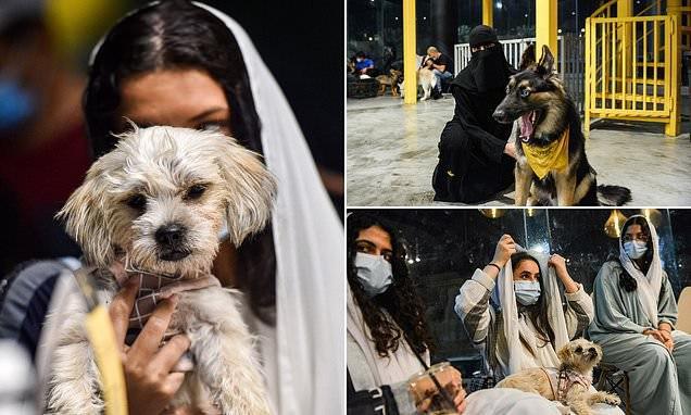 عکس| افتتاح اولین کافه برای سگها در عربستان