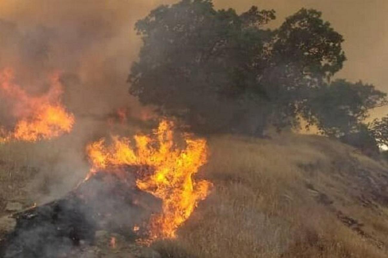 آتشسوزی گسترده در جنگلهای بوزین و مرهخیل پاوه