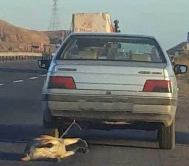 فرد حیوان آزار در نصیر شهر دستگیر شد