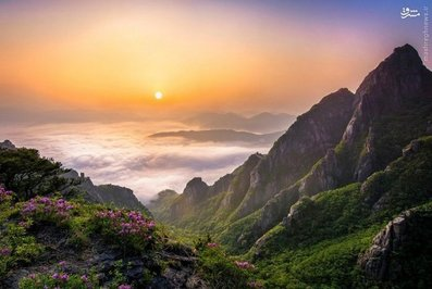 طبیعت خارقالعاده کرهجنوبی/تصاویر resized 82462 471