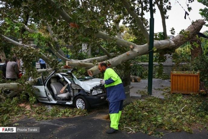 سقوط درخت در اثر طوفان در تهران (عکس)
