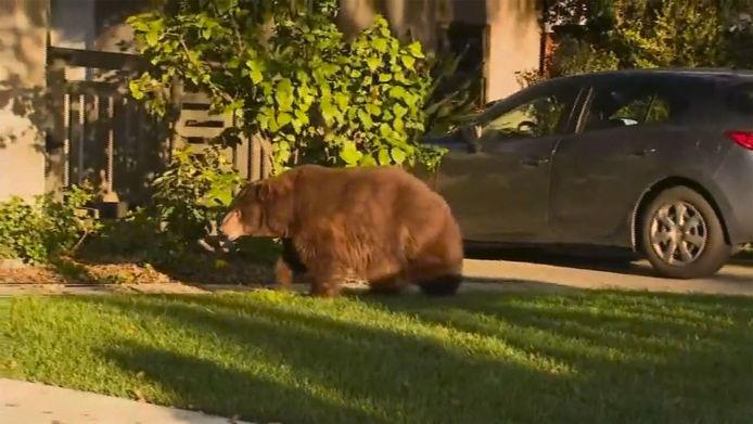 خرس نزدیک خانه مسکونی در کالیفرنیا