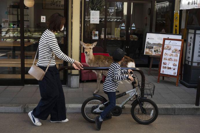 گوزن در کنار مغازه ای در شهر نارا ژاپن