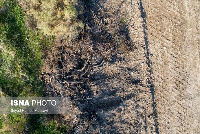 تصاویر  تخریب پوشش گیاهی پارک ملی کرخه