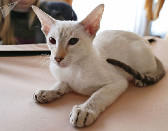 گربه ای در نمایشگاه کالینگراد