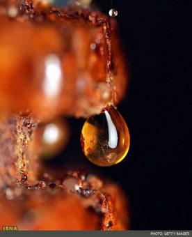 قطرات آب بر روی یک دیوار آجری با بازتاب قرمزی آجر درون قطره