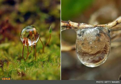 تصاویر خارقالعاده از قطرات آب در حالت مایع و نیمه جامد