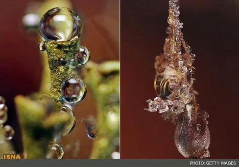 نمای نزدیک از نمایش جواهر مانند قطره آب